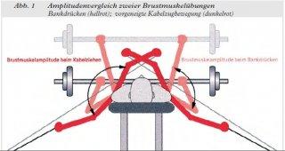 Mögliche Bewegungsamplitude Brust